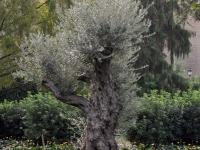 thumbs 35 Poprzez ziemię włoską. Reportaż z pielgrzymki szkolnej do Rzymu